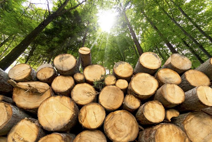 Meilenstein im Bereich Holz- und Papierwirtschaft